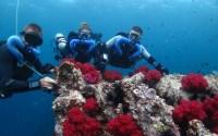 Coral reefs Phuket Triton