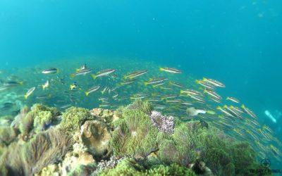 Diving Phuket in July 2017