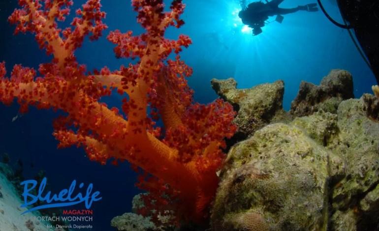 Kolonie koralowców żyją kilkaset lat, a niektóre dożywają nawet 4200 lat .