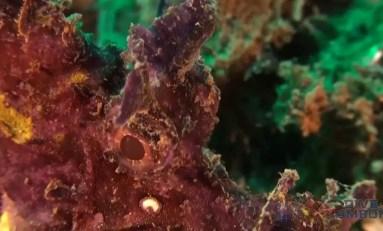 Nurkowanie w Indonezji: Ambon Bay