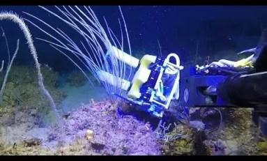 Unowocześnione chwytaki robota podwodnego niczym palce magika