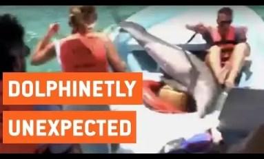 Niespodziewany skok delfina