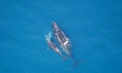Dlaczego wieloryby są duże?