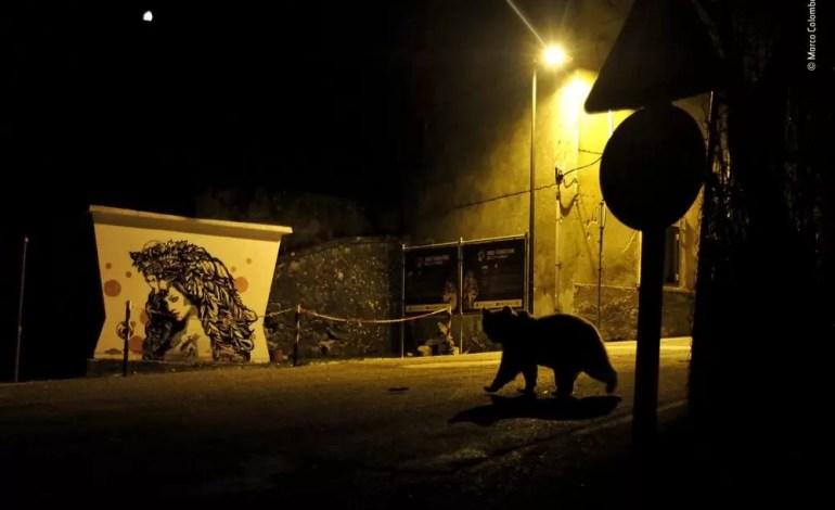 Skrzyżowanie ścieżek - Marco Colombo, Włochy. Zwycięzca 2018 w kategorii: Miejska Dzika przyroda.