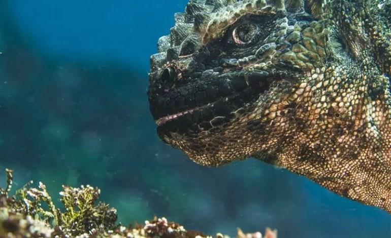"""Kategoria portret:  miejsce drugie: """"""""O nie, Godzilla"""" Bruce Sudweeks (Stany Zjednoczone)"""