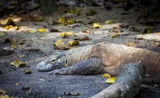 Wyspa Komodo zostanie zamknięta tymczasowo dla zwiedzających
