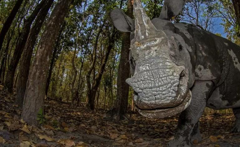 Drugie miejsce - Portrety zwierząt - Dzień nosorożca - Soumabrata Moulick