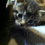 Heat Scrooge & Cute Kittens, Time to get Random