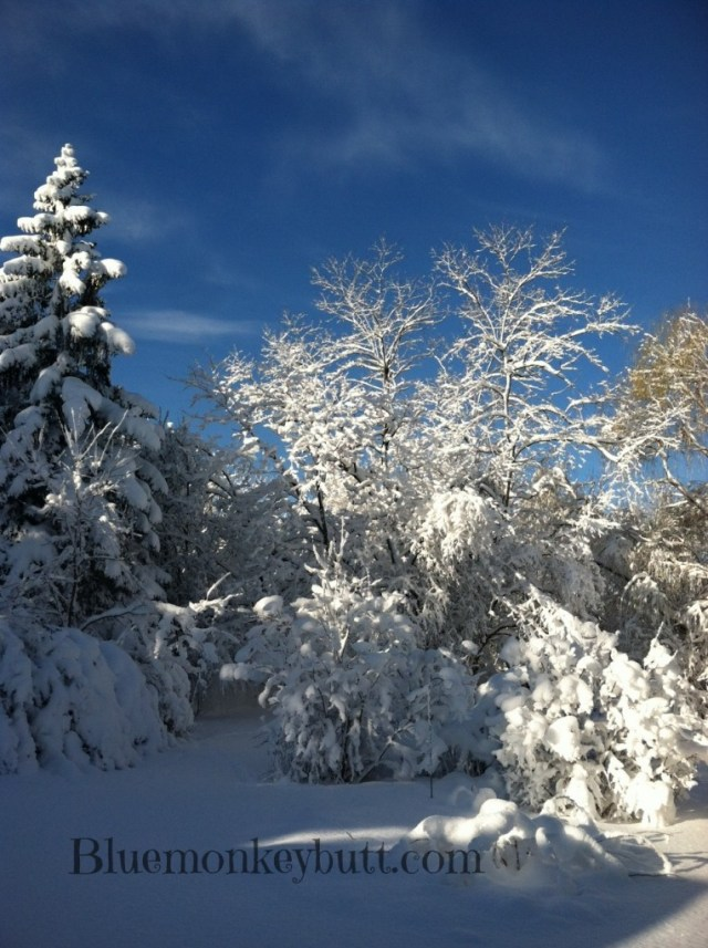 Snow and blue sky in my backyard from Nemo