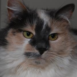 Paisley our Pet of the week from lollypop farm