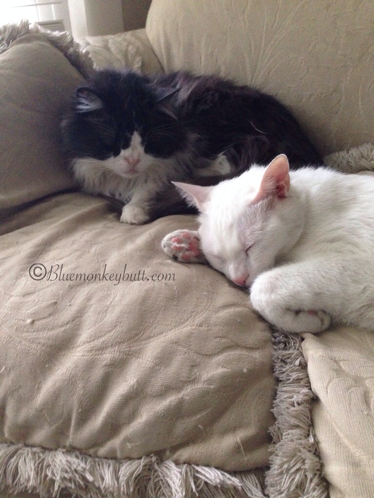 Snuffy and Rosie always together and they say don't forget it's National Adopt a Cat Month