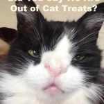 Meow Monday – Out of Cat Treats