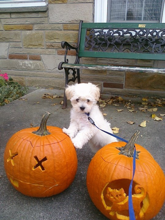 Halloween Pet Safety Meow Monday