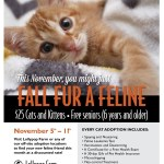 Fall Fur A Feline Meow Monday