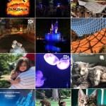 2018 Instagram Recap