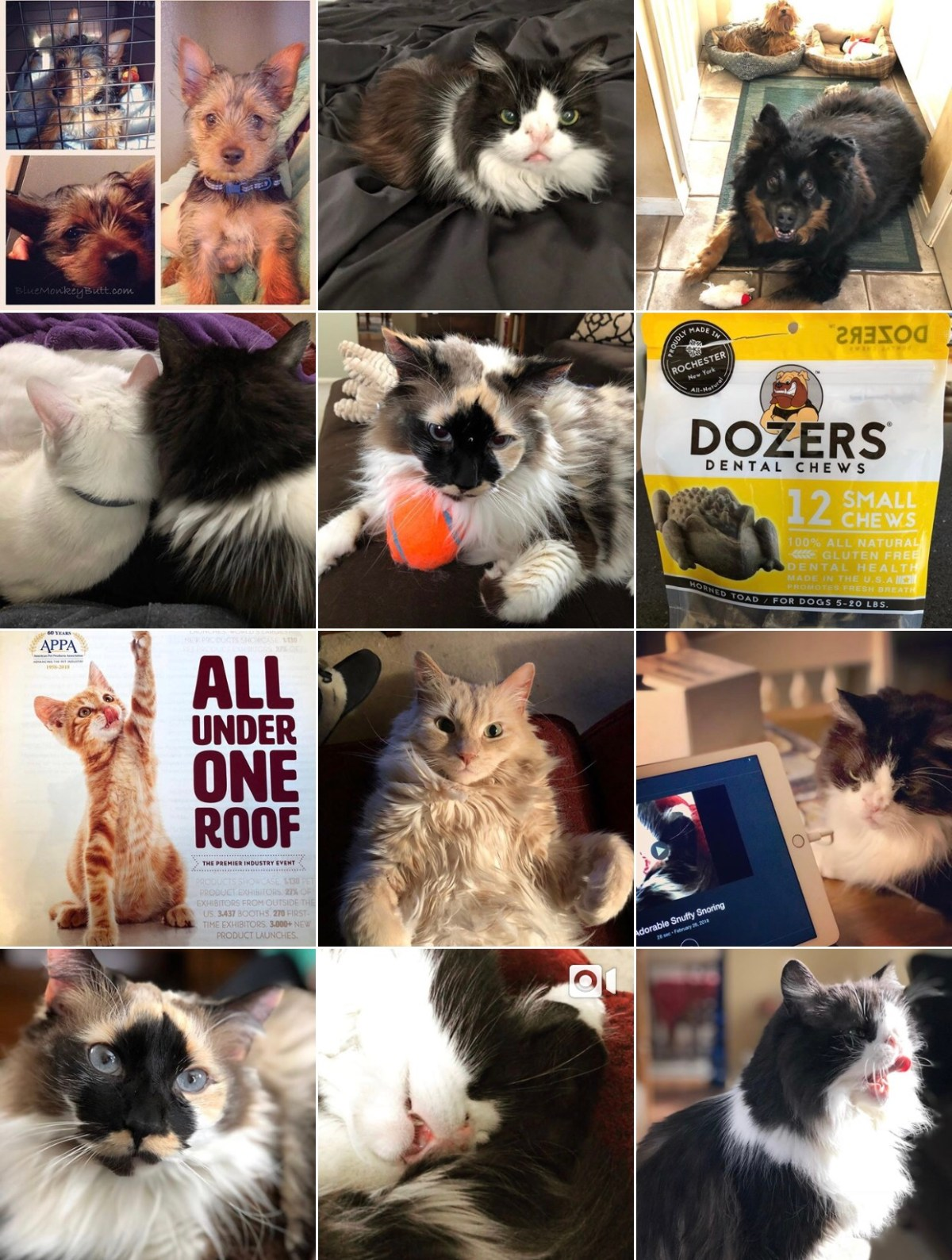 Collage of cat pictures