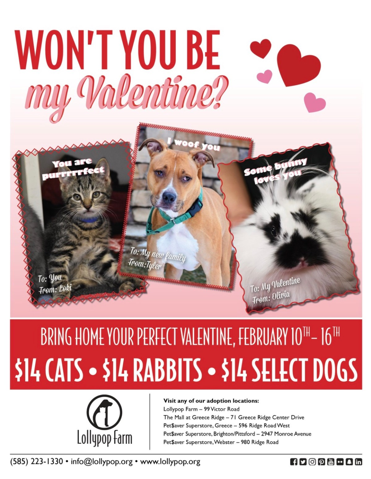 Adoption special with a dog, cat, and a rabbit