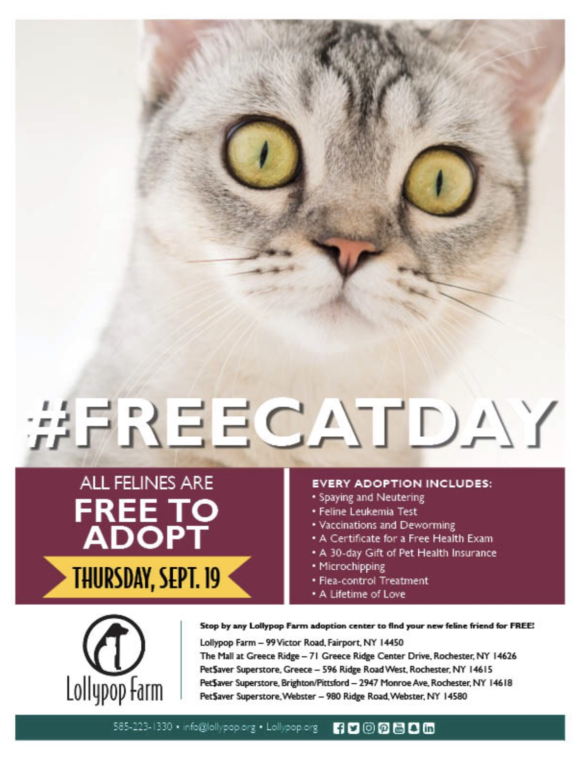 Free cat day poster for 9/19/19