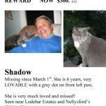 Shadow Missing Cat - Gray smoky color - Reward - Nellysford