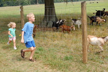 Running with the goats