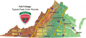 Typical Fall Peak Colors Map Via VA Department Of Forestry - Click To Enlarge