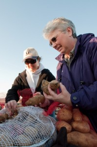 Dawn Clarkson (left) and Becky McMurry help bag the potatoes.