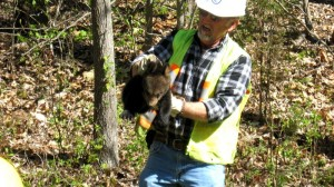 The bear cubs were taken to Virginia Tech where they will be cared for and eventually released back into the wild.