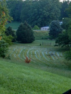 A rare mid-May frost settles on raked grass in this field waiting to be bailed. Greenfield/Afton, Virginia