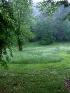 ©2010 www.nelsoncountylife.com : Everything is a deep beautiful green after scattered showers on Tuesday.