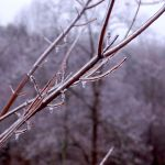 Icy Start To Saturday Across Nelson