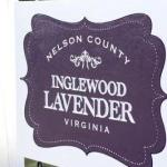 Inglewood Lavender Farm, Nelson Co., VA. Photo by Hayley Osborne.