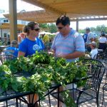 Annual Hop Harvest At Blue Mountain Brewery