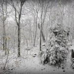 Sandy: First Rain & Wind, Now Snow!