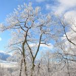 Nelson: Winter Returns To Wintergreen Resort