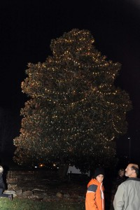 Lighting of the Christmas Tree by Cindy Cobb.