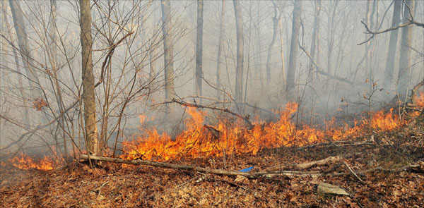 The slightest spark can start a brush fire (file photo).