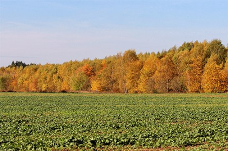 autumn trees beside a field of plants illustrating agroforestry