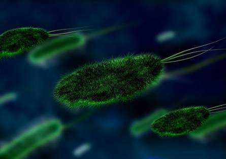 bacteria with flagella swimming in solution illustrating the abundance of microbial life