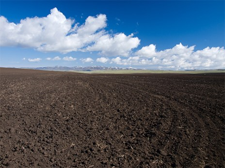 exposed agricultural soil from a harvest illustrating the vulnerability of soil to wind and water erosion