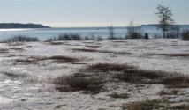 Sanford Kelley's wild Maine blueberry field, Mason Bay, Jonesport, Maine