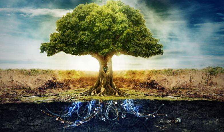 Tree of Life Activation workshop