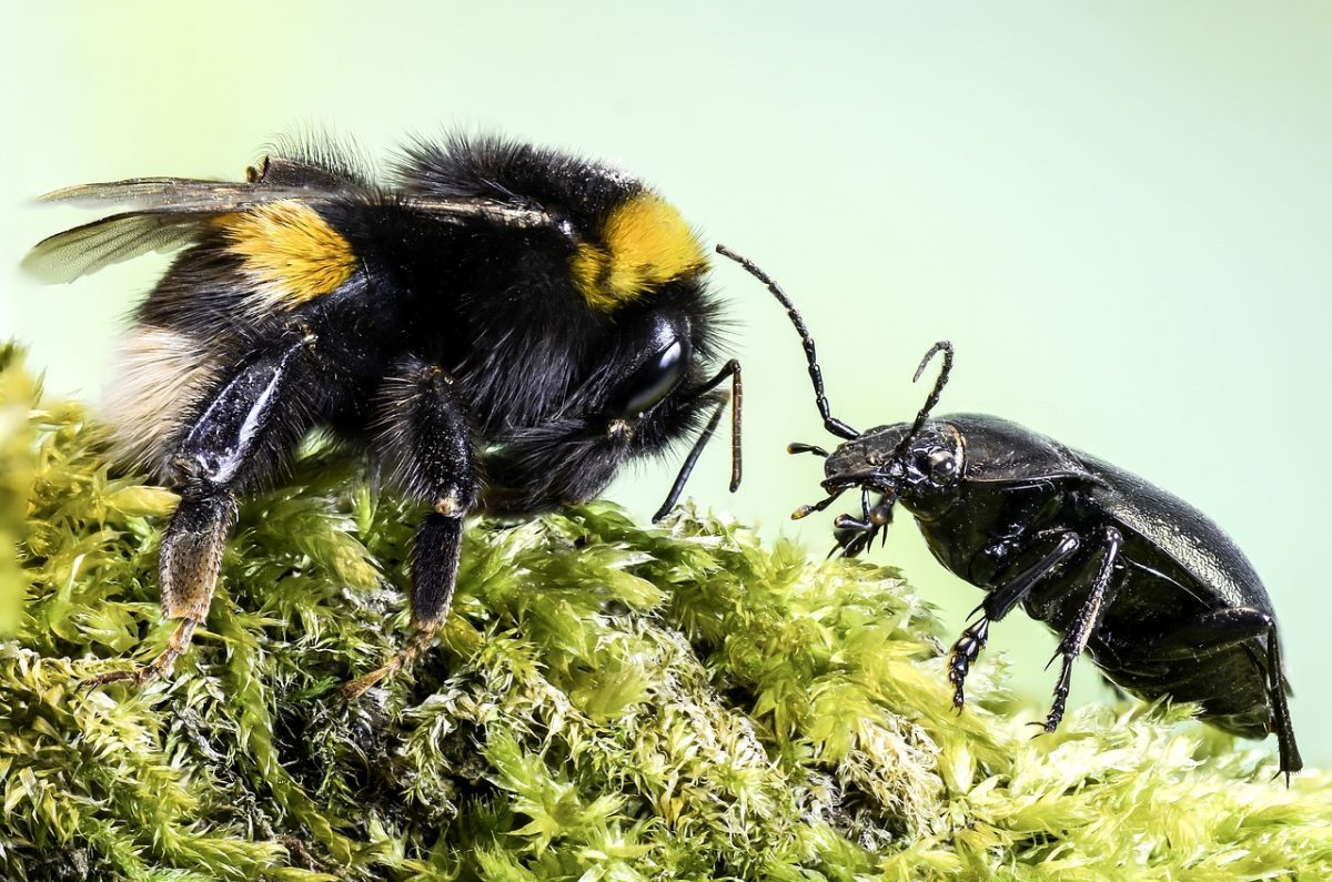One bee interviewing and giving advice to another bee