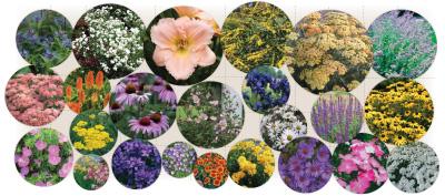 Over $210.00 worth of plants, 24 varieties, 24 plants, 5'x 12'