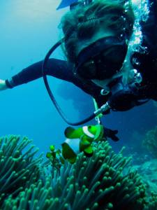 Pileh Wall, Scuba Diving, Phi Phi , Thailand