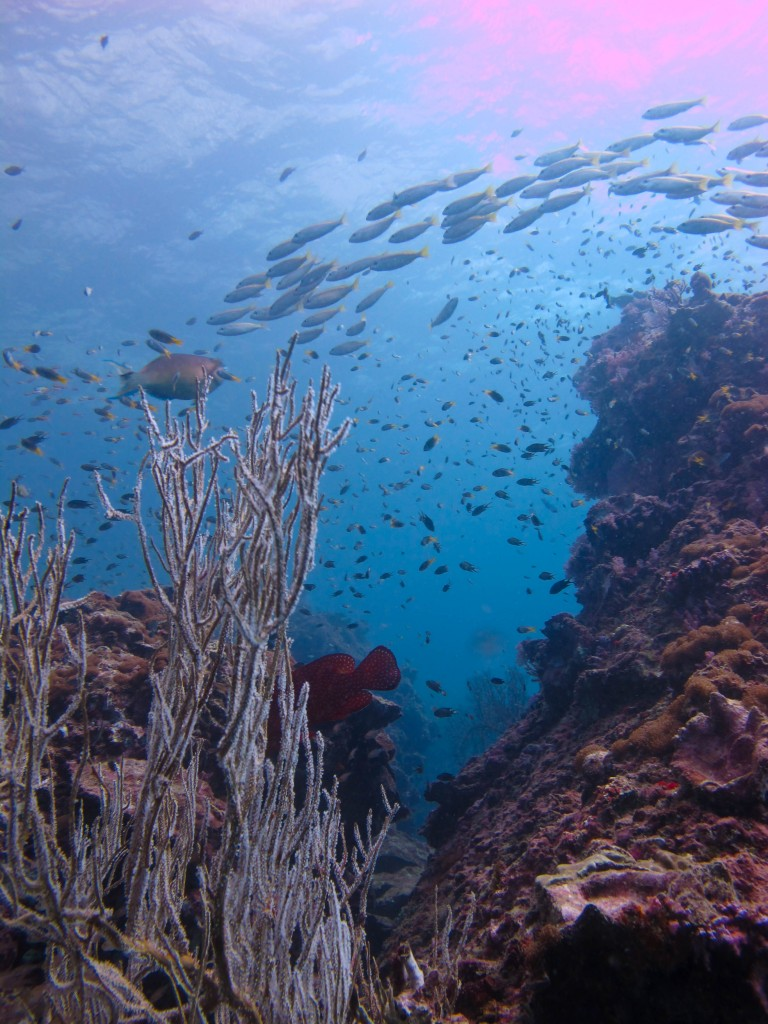 Palong diving, DIVE TRIPS Koh Phi Phi, Thailand