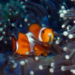 Discover scuba diving,,dive log PADI specialty specality courses padi speciality