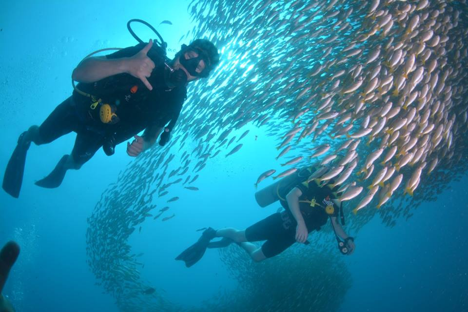 diver fish awesome open water course phi phi