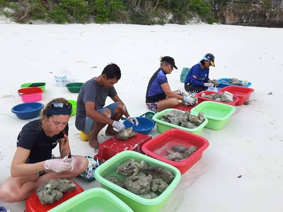 conservation diving coral propagation phi phi island
