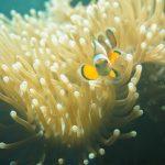 clown fish dive sites bida nai