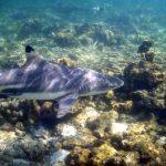 snorkel phi phi dive sites